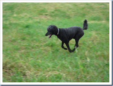 20110706_dogs_003
