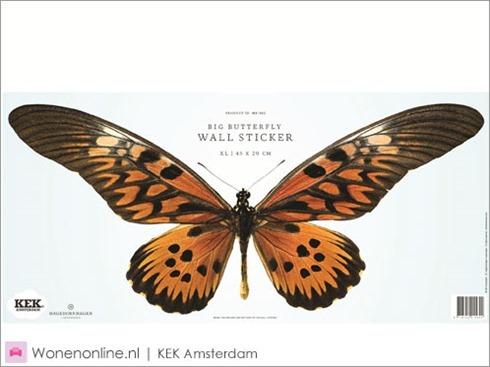 kek-amsterdam-vlinder-butterfly-muurstickers-4