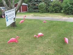 you've been flocked1