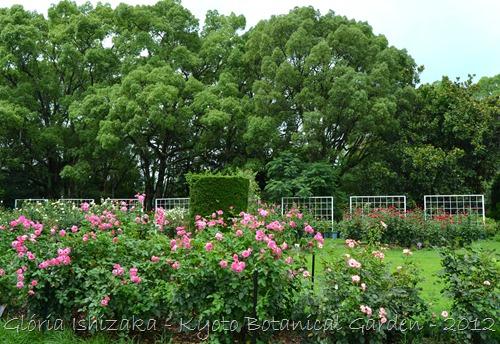 Glória Ishizaka -   Kyoto Botanical Garden 2012 - 118