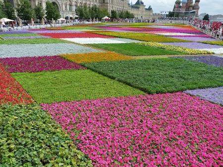 Covor floral la Moscova