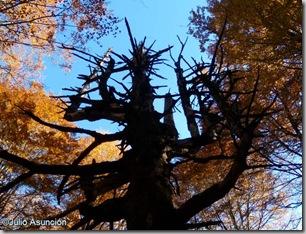 Selva de Irati - El Roble Muerto