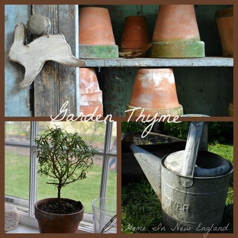 garden thyme1
