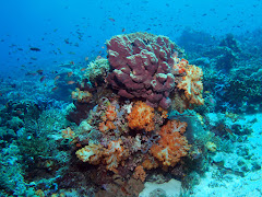 Corals at Tatawa Becar