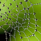 Water droplets in a spider web.  Note the beech tree caught in the lens of the droplets.