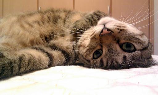 [写真]ベッドの上で甘えたいポーズ