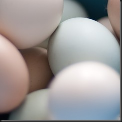 abstract eggs (1 of 1)