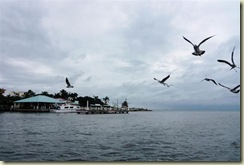 Belize city and Birds 1 (Small)