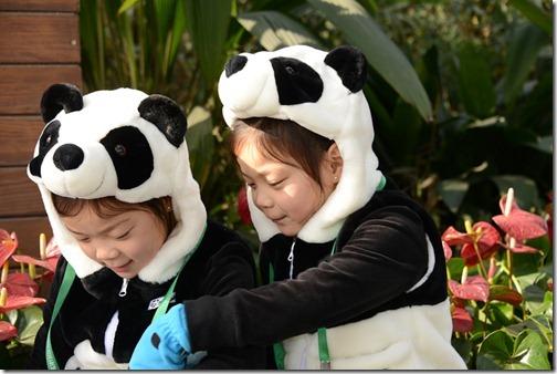 DSC_7226LR_Pandas