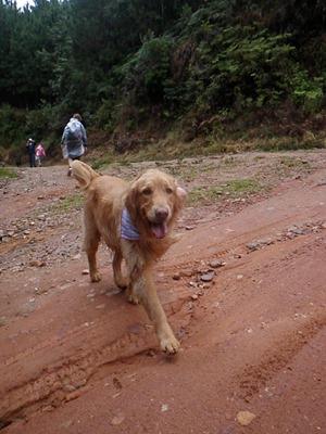 Dogs Trekking 4 (234)