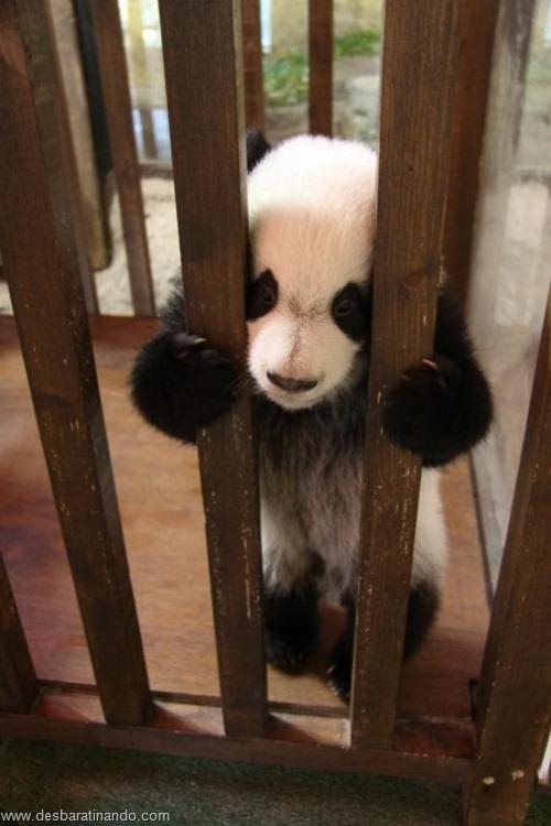 filhotes recem nascidos zoo zoologico desbaratinando animais lindos fofos  (12)