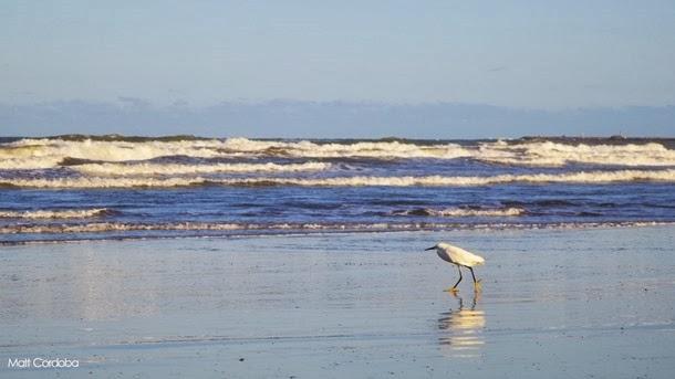 Aves marinhas andorinha mar