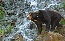 trégomeur ours