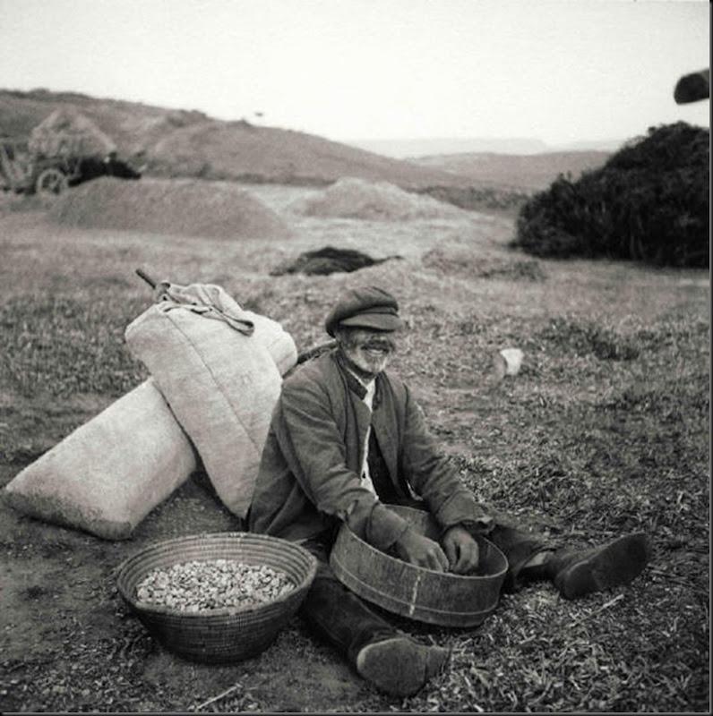© Ugo Pellis-Museo delle Culture, Lugano, Switzerland. - Uomo che pulisce fave - Escalaplano - 16 Giugno 1934