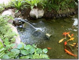 Koi at Rasa Sentosa Resort Singapore