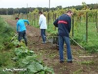 De leerlingen van de TP stroom aan het werk in de wijngaard