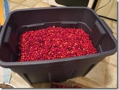 cranberry bog 01