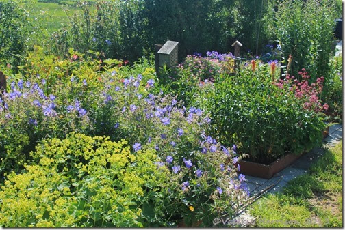 herbacious-borders