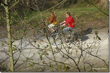 遊歩道を走る自転車、木々には新録が広がり始めている。