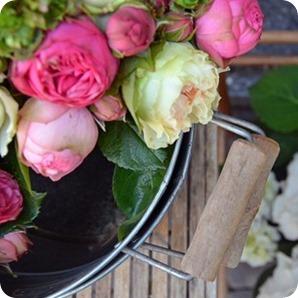 R wie Rosen #abcfee im Oktober