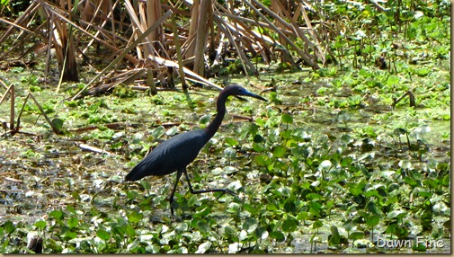 OrlandoWetlands_162