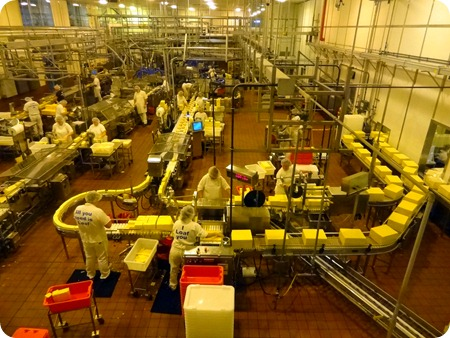 Tillamook Cheese production line.