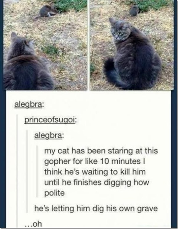 funny-tumblr-comments-30