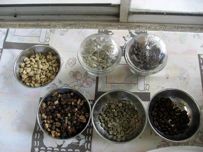 coffee beans in various stages
