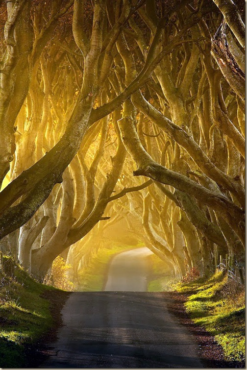 The-dark-hedges-003