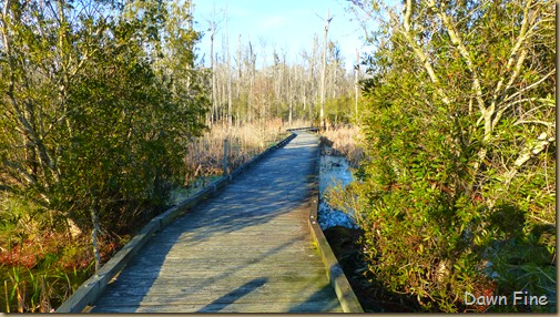 Goose Creek State Park _023