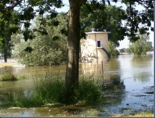 Rheinufer juni