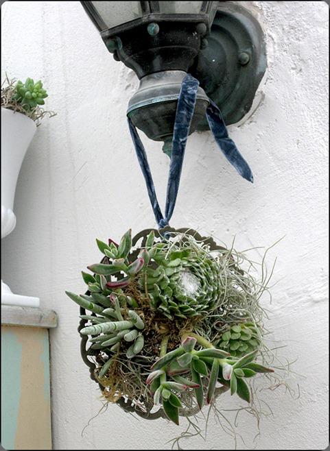 succulent-framed-art_1464  krista jon