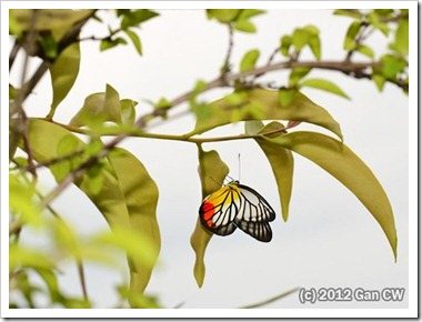 GanGarden-20120128_DN45-480