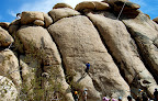 Rock climbing in Joshua Tree National Park (Photo by Rick Parker)</p> <p>(Pic property of Harmony Motel)