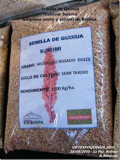 Semilla de Quinua del cultivar Surumi - Rubén Miranda - Laquinua.blogspot.com