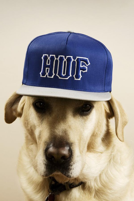 Dogs-with-capsThomas-Høedholt-7.jpg