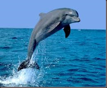 Amazing Pictures of Animals.  Dolphins, Cetacea, Delfin. Alex  (8)
