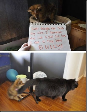 bad_dogs_publicly_shamed_640_high_13