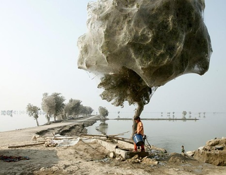 webby tree