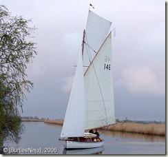 Sally A42-146