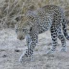 Ein schönes Tier, oder? © Foto: Marco Penzel | Outback Africa Erlebnisreisen