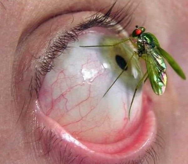 1- Entomofobia