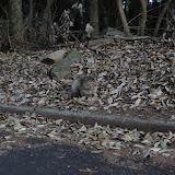 20100417_cat