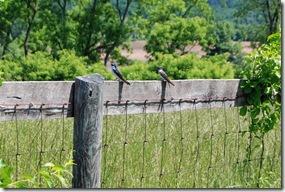 bluebird27