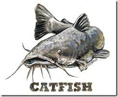 catfish_2Dlarge_small
