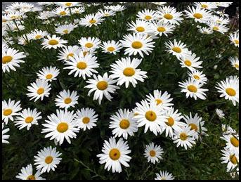 03d3 - Bar Harbor - Beautiful Flowers