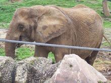 2013.10.26-006 éléphant
