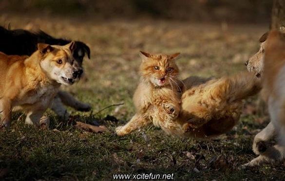 242967,xcitefun-brave-cat-4