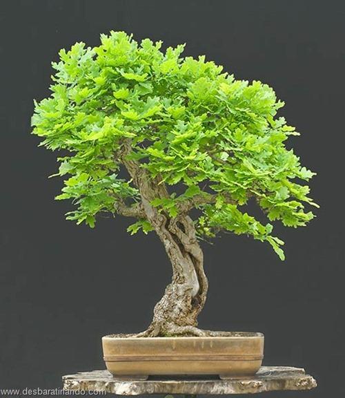 bonsais arvores em miniatura desbaratinando (82)