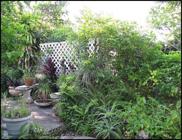 06-08 jungle15